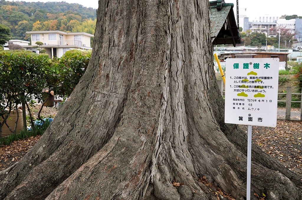 楠木神社/保護樹木