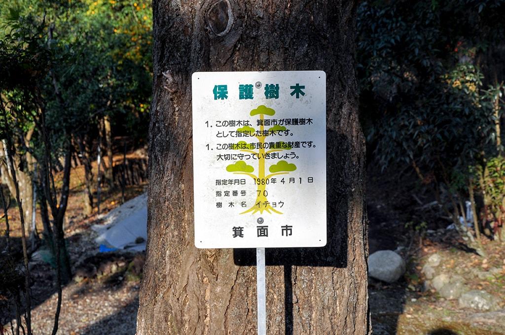 止々呂美神社/保護樹木