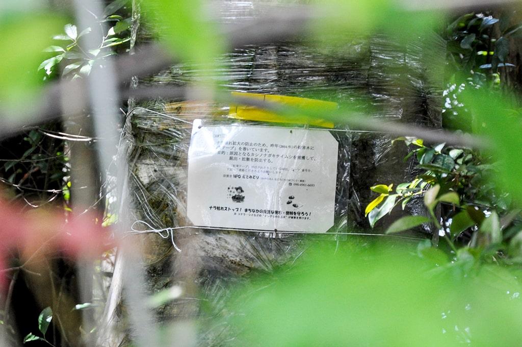 小野原春日神社・ナラ枯れ被害
