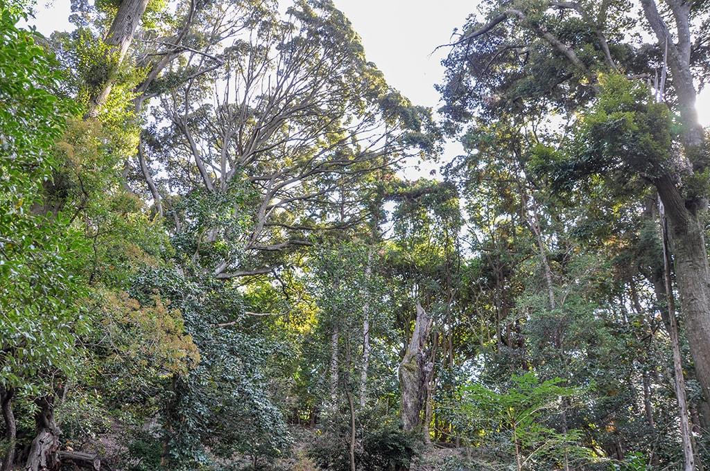 大宮寺の森
